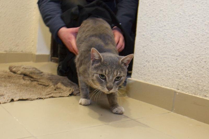 Почему котенок не ест в новом доме